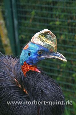 Vogelpark Walsrode - Rothalskasuar