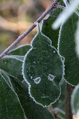 Frostgesichter 4