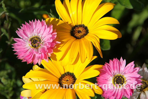 Blütenträume 7
