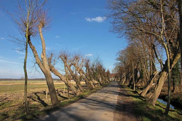 Kalkriese - Weg Alt Barenaue