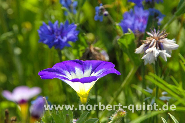 Blütenträume 4
