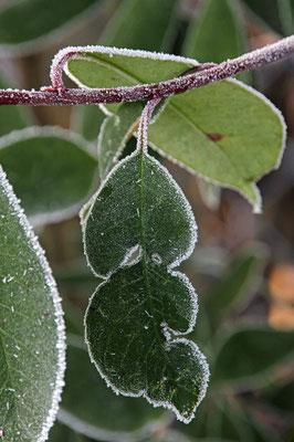 Frostgesichter 5