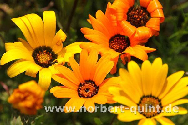 Blütenträume 18