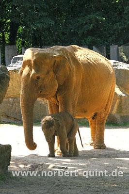 Zoo Osnabrück  (Elefanten)
