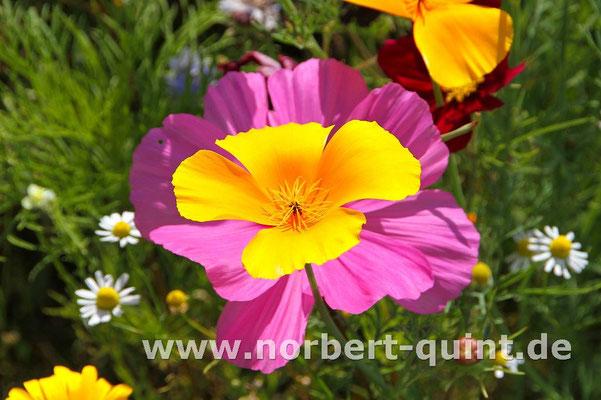 Blütenträume 10