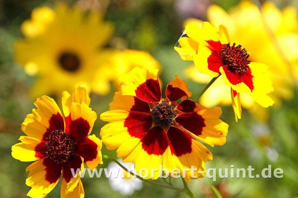 Blütenträume 12