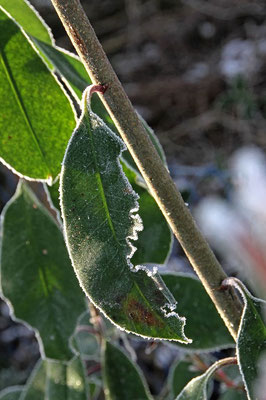 Frostgesichter 7