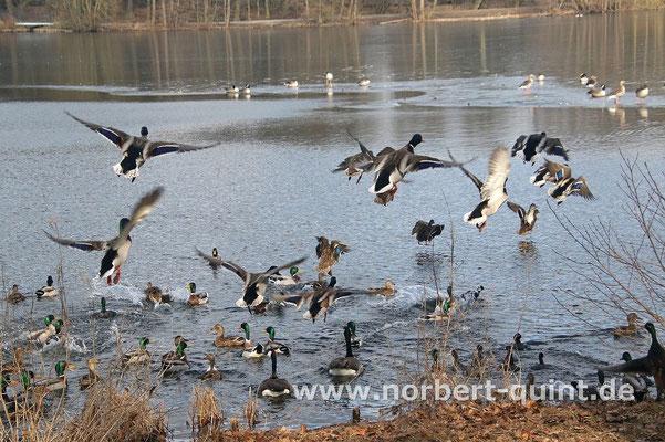 Osnabrück - Rubbenbruchsee