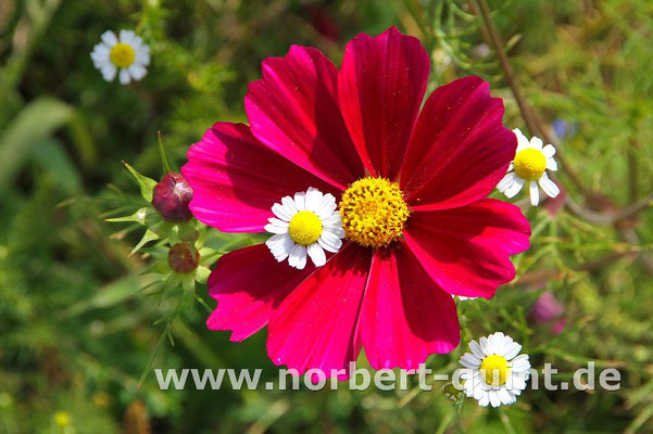 Blütenträume 3