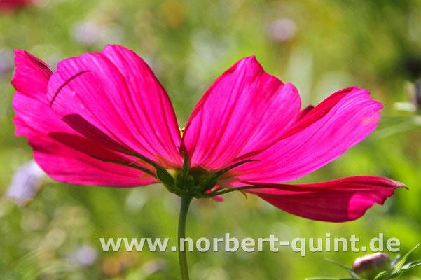 Blütenträume 8