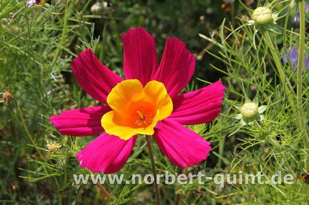 Blütenträume 13