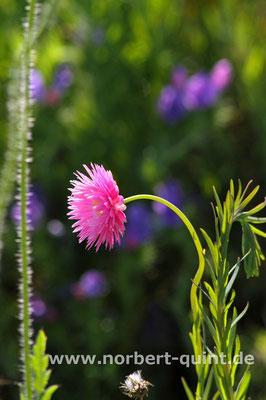 Blütenträume 16