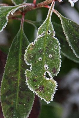 Frostgesichter 6