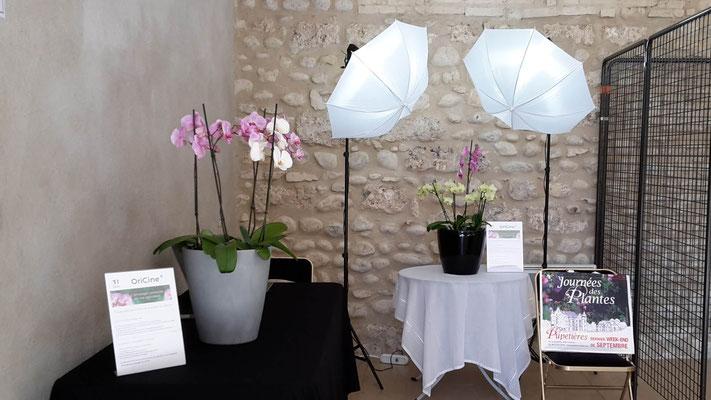 arrosage orchidée avec OriCine à Pupetières