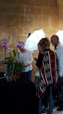 arrosage-orchidee-oricine-fontfroide