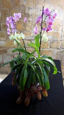 arrosage-orchidee-plante-carnivore-oricine-fontfroide