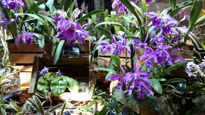 belles-orchidees-fontfroide