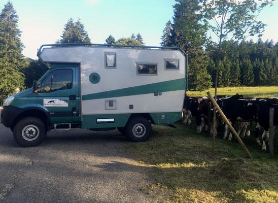 Iveco 4x4 Greenhorn alle Rinder einsteigen bitte