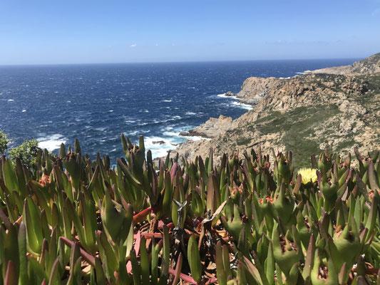 Korsikas Westküste