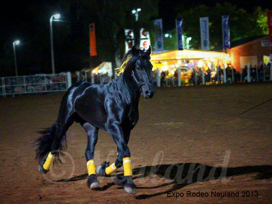 Expo Rodeo Neuland 2013