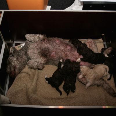 Gina ligt op de rug en word belaagd door de pups