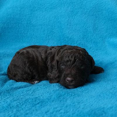 Teef 1 heet Joke. Ze is bijna helemaal bruin en heeft maar een kleine witte borstvlek.