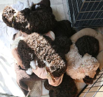 En na het buiten spelen lekker opwarmen en opdrogen. Hoeveel pups tel je?