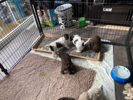 Na de maaltijd gaan eerst 4 pups naar toilet.