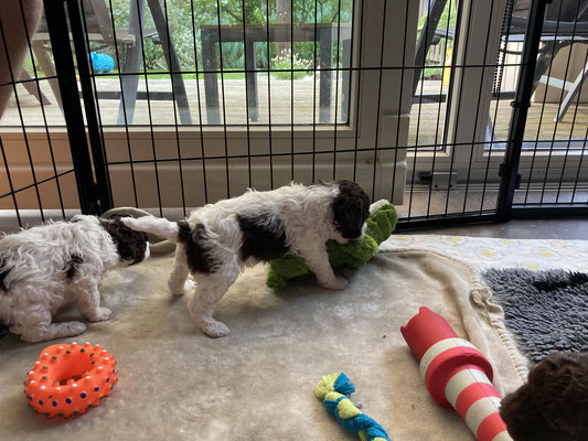 Melba heeft een krokodil ontdekt!