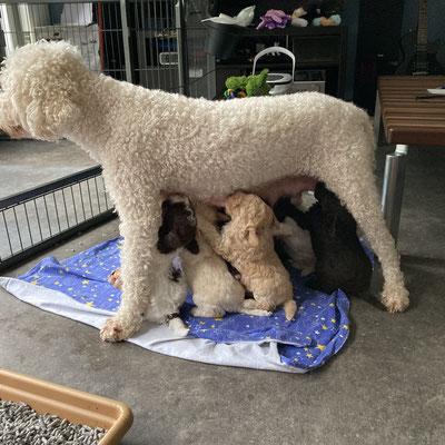 Een dag later: kijk waar Biene staat! Ze zegt voor grip voor de pups.