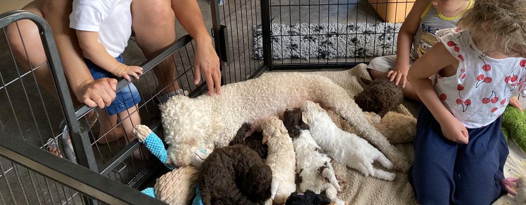 Pups voeden tussen de visite.