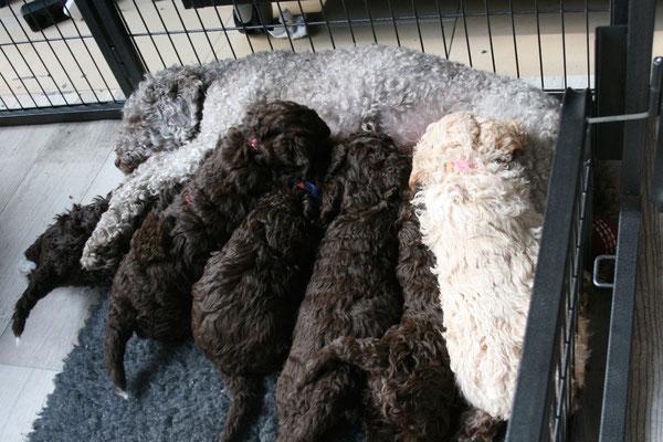 Gina is bedolven onder de pups
