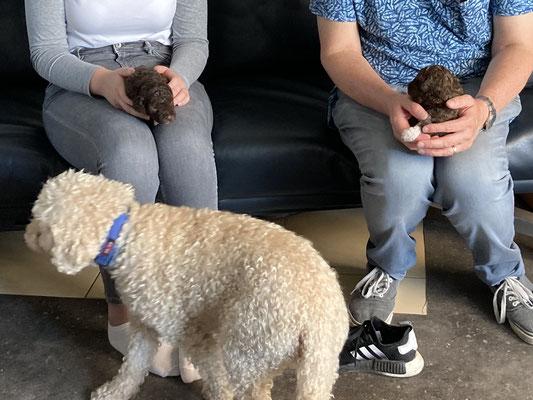 Elke pup is een keer aan de beurt. Lisa houdt alles in de gaten.