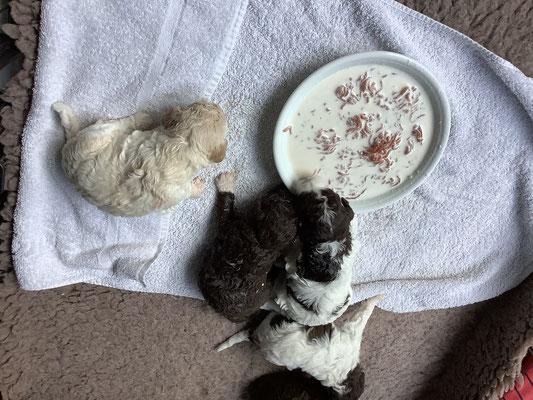 Eten van een diep boordje: geitenmelk en gehakt