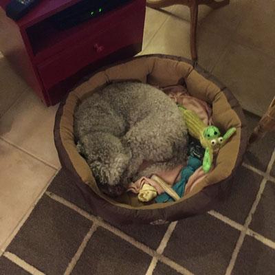 dag 25 Gina is moe en erg aanhankelijk.