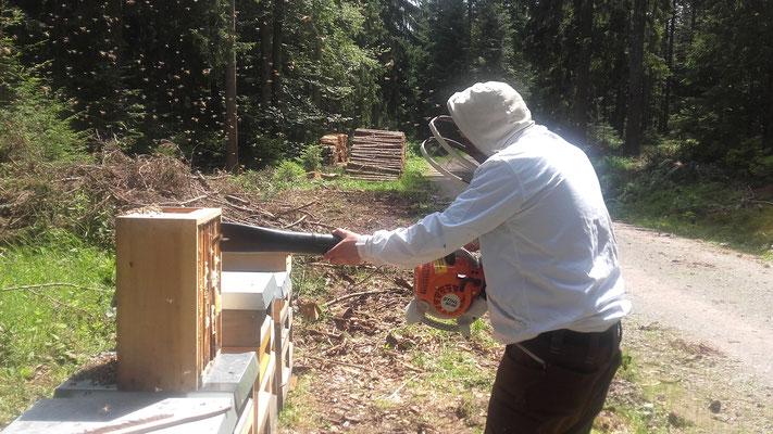 Honigernte mit dem Laubgebläse - effektiv und bienenschonend !