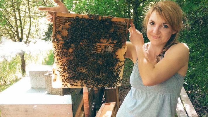Naturwabenbau am Honigrähmchen - Eine Pracht!
