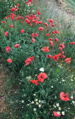 Leuchtende Wildblumenwiese von Marion Hegge.