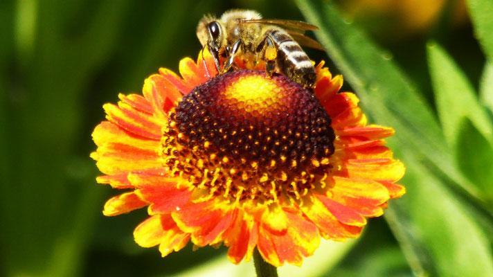 Peter Paul Löning: Blütenbesucher