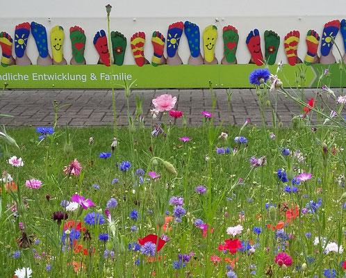 Blühwiese an den Vitus-Kindertagesstätten in Haselünne (Foto: Petra Frischmuth)