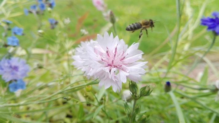 Bei Nicole Becker kehren viele Insekten ein.
