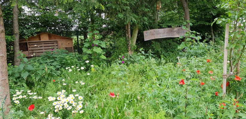 Josef Telgen lädt in seine wilde Ecke Schmetterlinge und Igel ein.