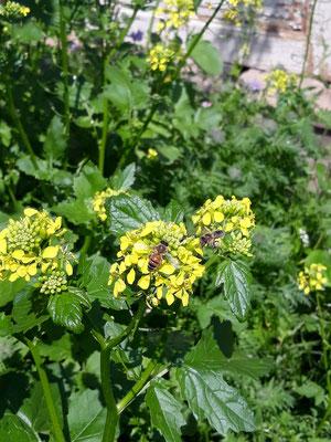 Andrea Gravel: Die richtige Blühmischung lockt viele Insekten an.