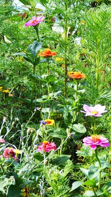 Peter Paul Löning: Blütenpracht im Hochsommer