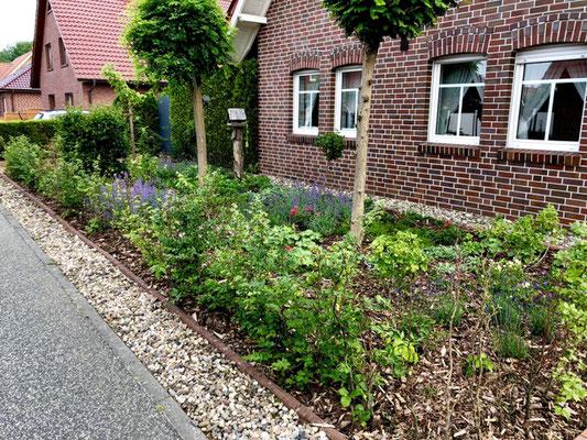 Vorgarten in Papenburg: Häcksel und Pflanzen statt Schotter (Jonas Schlömer)