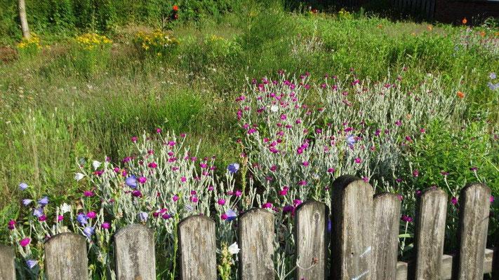 Johannes Wiemker fiel dieses bienenfreundlich verwilderte Grundstück in Lingen auf.