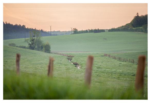 A Mussy sur seine, proche de mon terrain de chasse, on peut voir de loin, trop loin, 2 grands cervidés