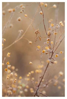 Prairie Charpentée