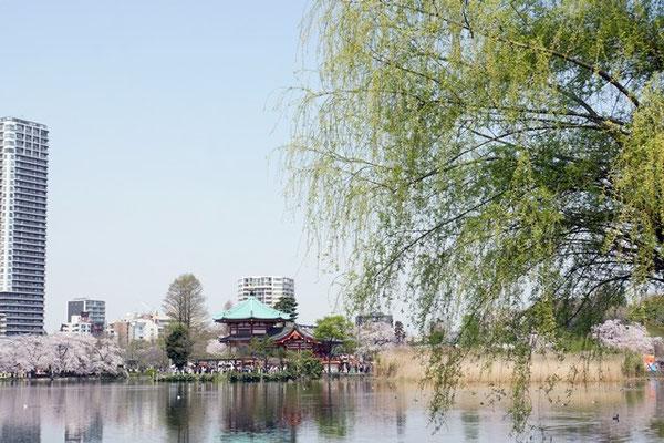 不忍の池と柳
