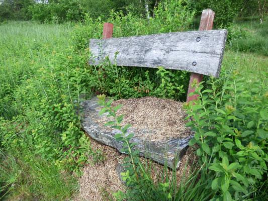 Ein Ameisenstaat hat sich eine Bank am Rande des Weges als Unterbau ausgesucht